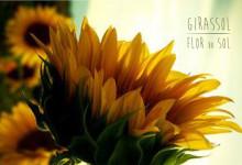 Girassóis  by Flor de Laranjeira